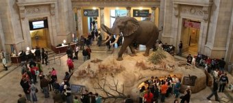 American Museum of Natural History Internship