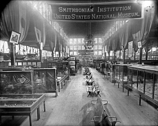 Smithsonian Exhibit at the 1888 Cincinnati, Ohio, Exposition, by Unknown, 1888, Smithsonian Archives - History Div, MAH-4462.