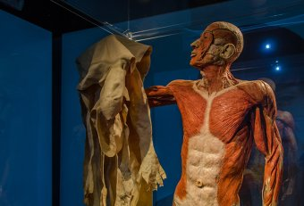 Human body Museum New York
